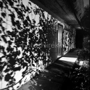 Féner Tamás- holdfény fotó: Artphoto Galéria