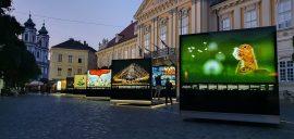 Máté Bence kiállítás Székesfehérvár